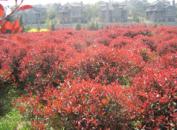 南京绿浦苗圃场