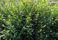 漳州�x煌花木