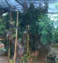漳平市大华百亩花卉园
