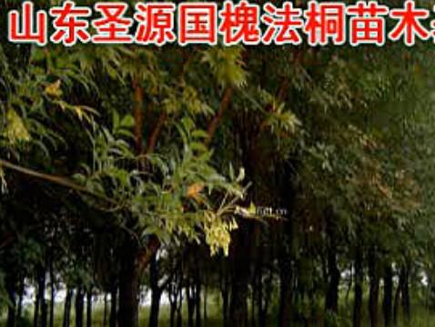 圣源苗木种植基地