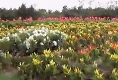 锦州世界园林博览会